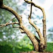 Tree Environment Asset 1 3d model