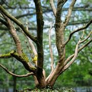 Реалистичная ссылка на 3D-сканированное дерево 3d model