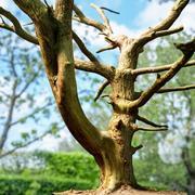 Tanzender Baum Fotorealistischer Vermögenswert 3d model