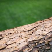 3Dスキャンされた樹皮資産 3d model