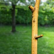 Rama de un árbol amarillo modelo 3d