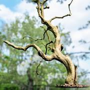 Varredura de árvore encaracolada 3d model
