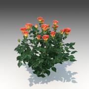 Flower Rose Set_001 modelo 3d