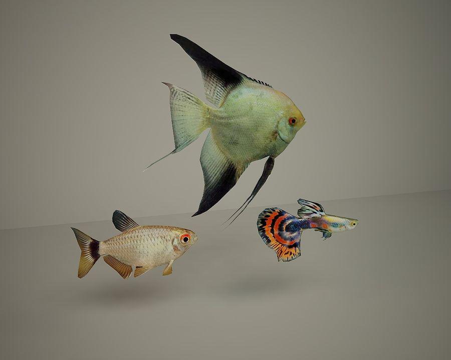 colección de peces royalty-free modelo 3d - Preview no. 1