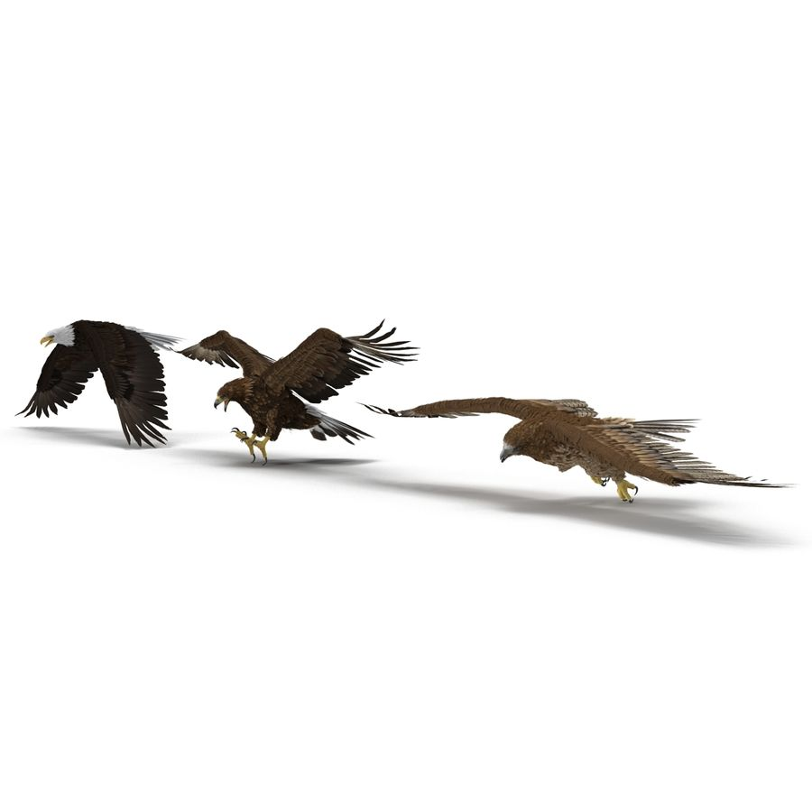 Rigged Eagles 3D Models Collection royalty-free 3d model - Preview no. 7