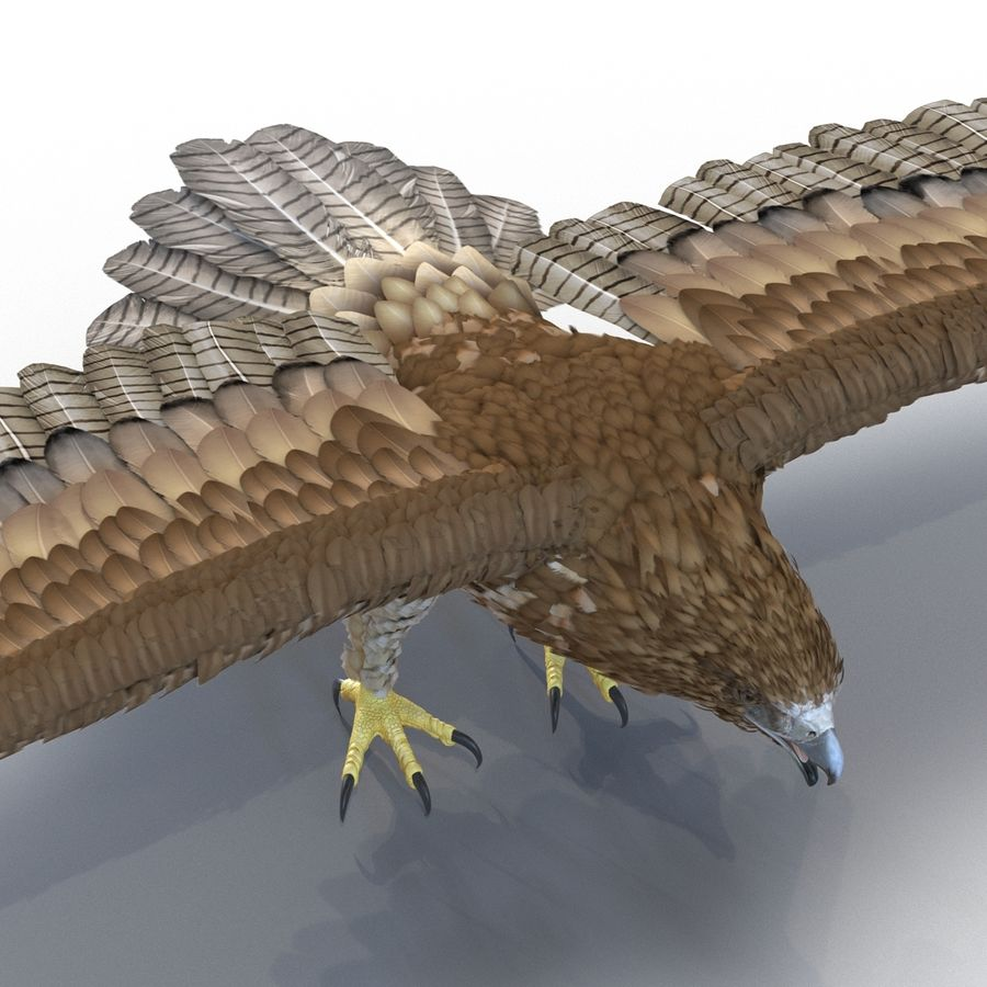 Rigged Eagles 3D Models Collection royalty-free 3d model - Preview no. 57