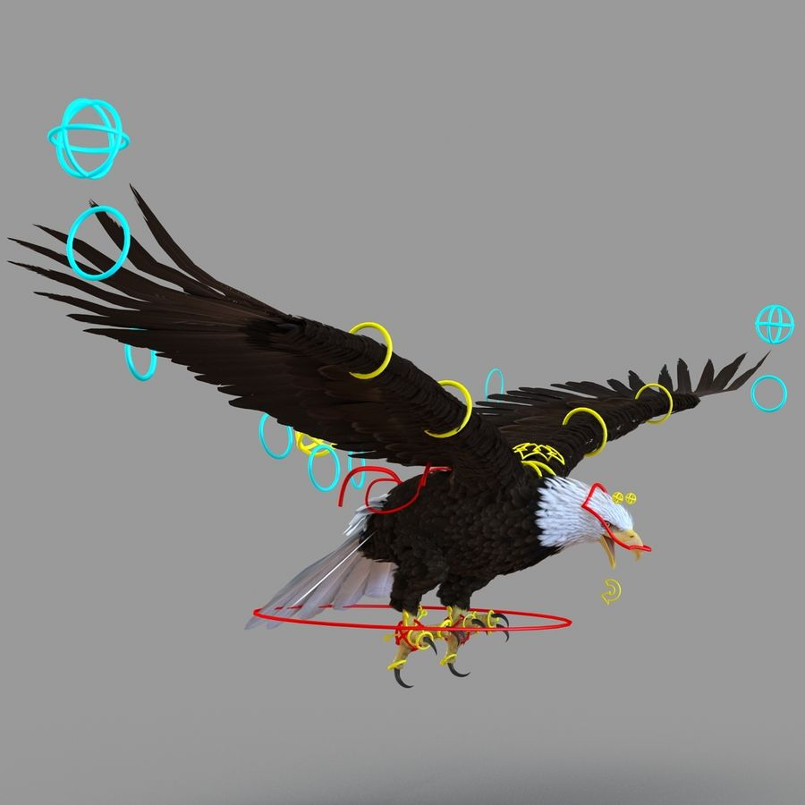 Rigged Eagles 3D Models Collection royalty-free 3d model - Preview no. 75