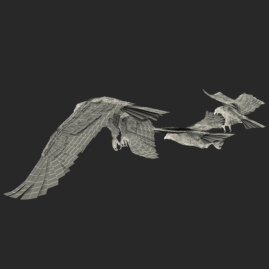 Rigged Eagles 3D Models Collection royalty-free 3d model - Preview no. 89