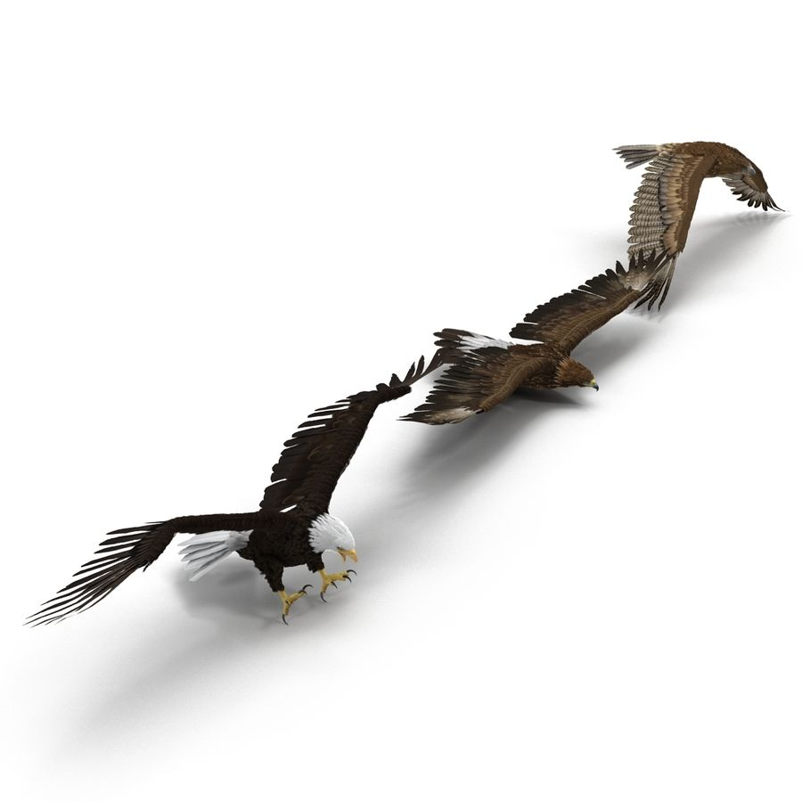 Rigged Eagles 3D Models Collection royalty-free 3d model - Preview no. 2