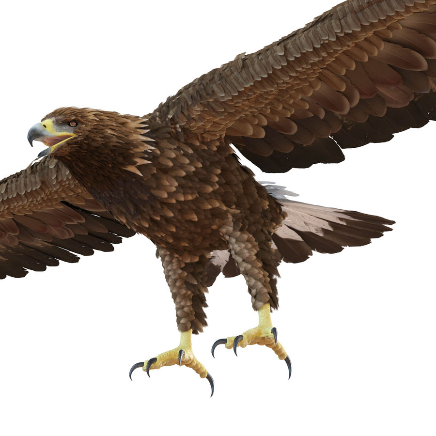 Rigged Eagles 3D Models Collection royalty-free 3d model - Preview no. 36