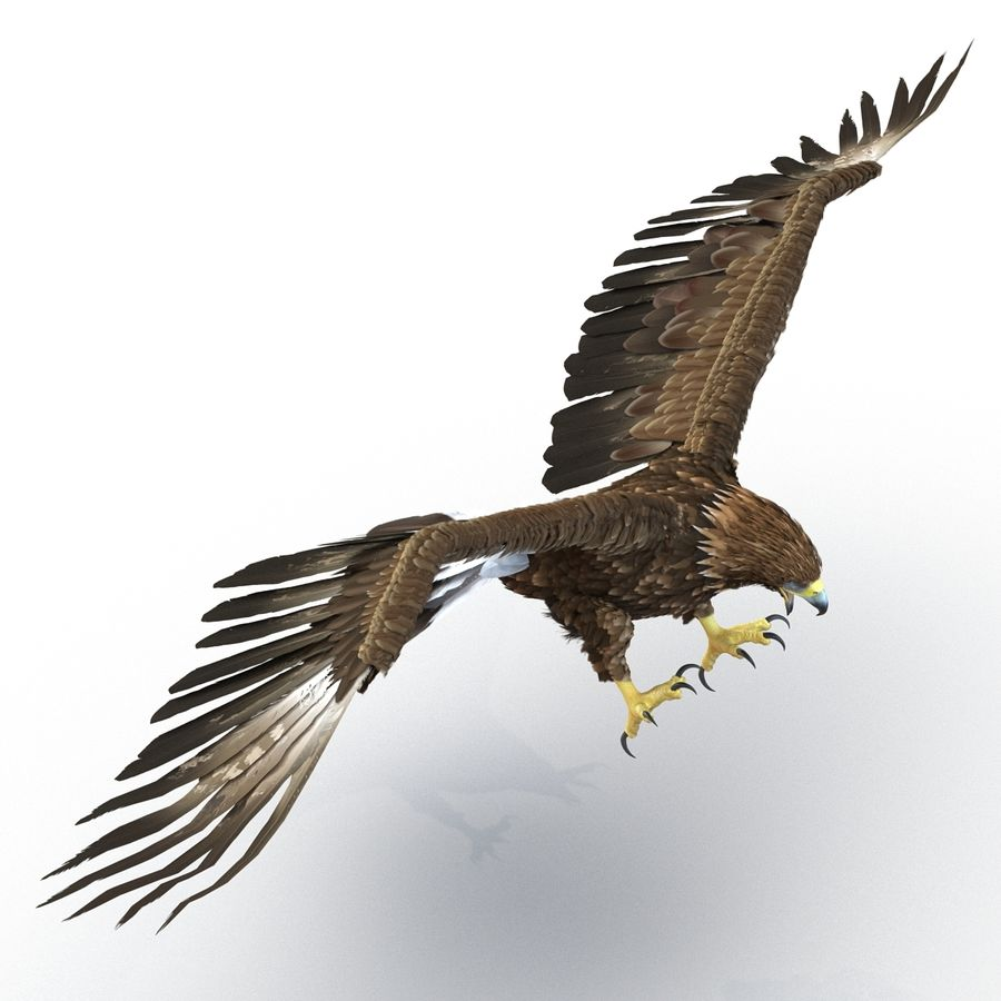 Rigged Eagles 3D Models Collection royalty-free 3d model - Preview no. 49