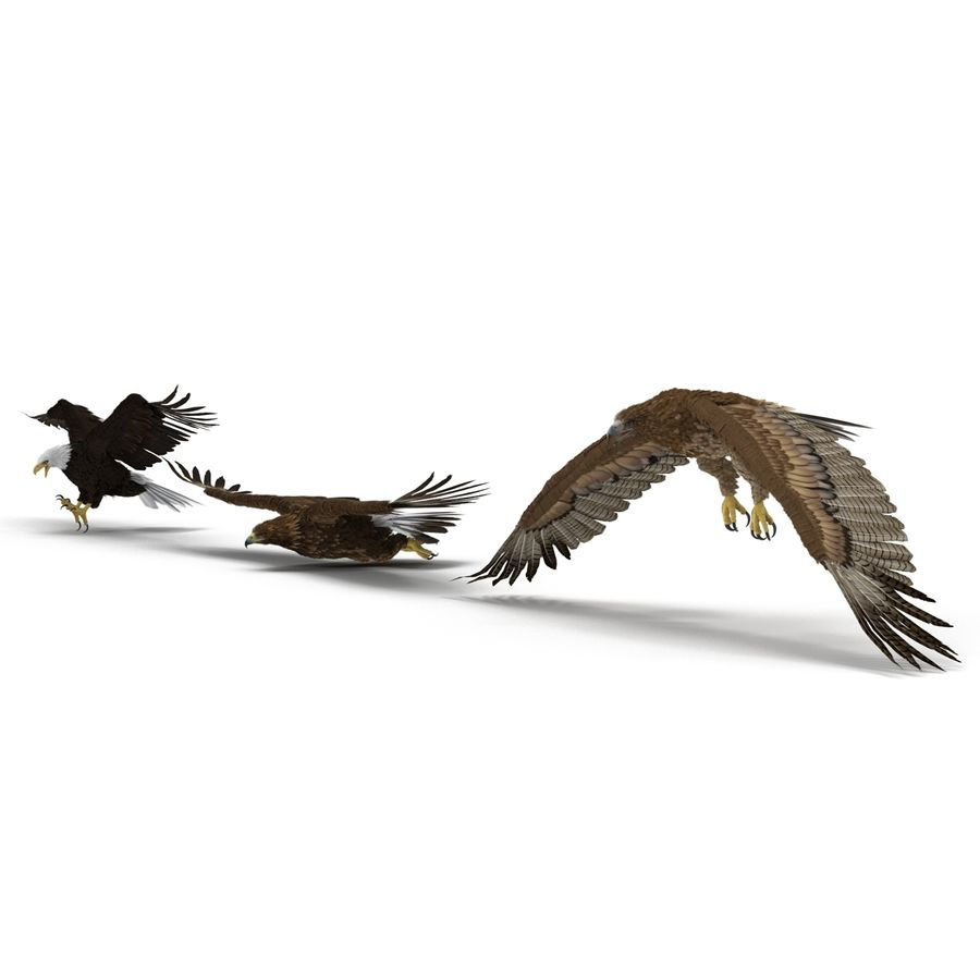 Rigged Eagles 3D Models Collection royalty-free 3d model - Preview no. 6