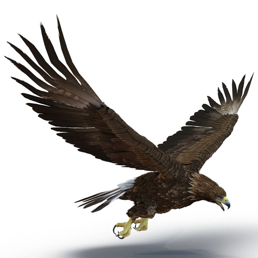 Rigged Eagles 3D Models Collection royalty-free 3d model - Preview no. 41
