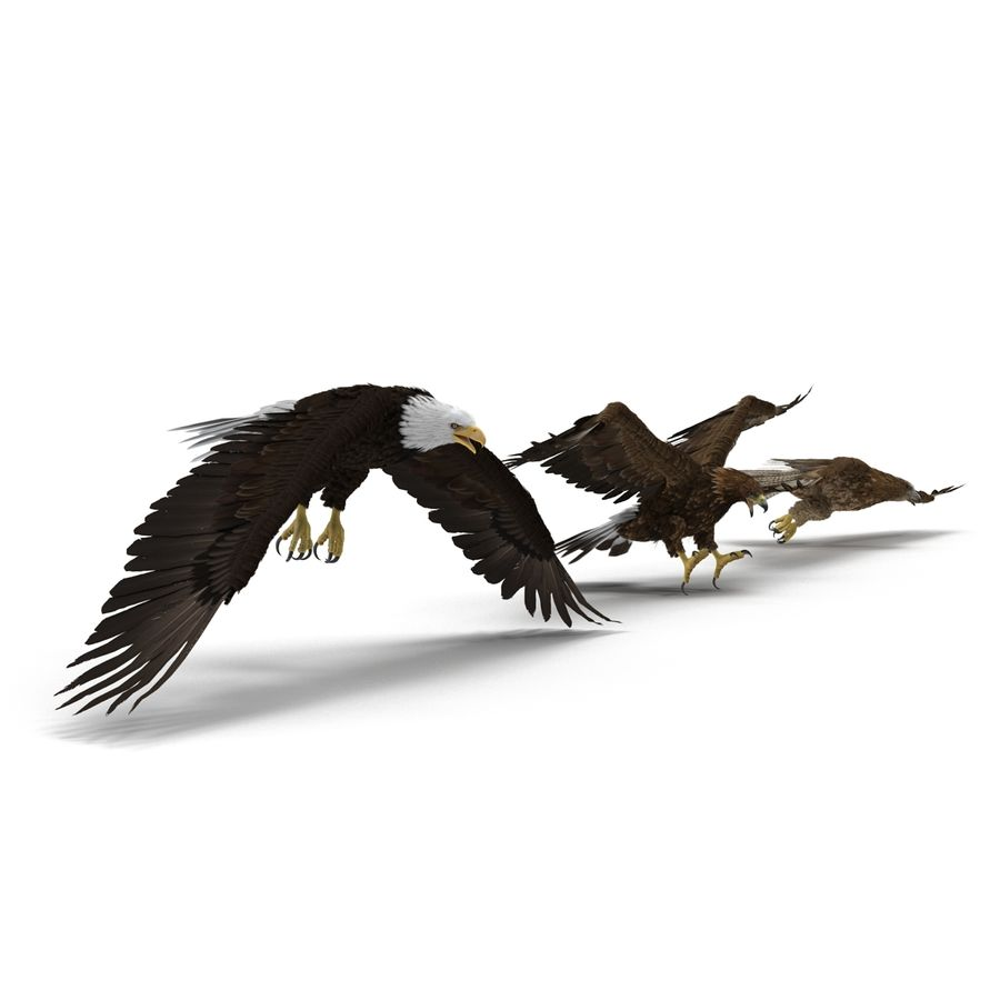 Rigged Eagles 3D Models Collection royalty-free 3d model - Preview no. 5