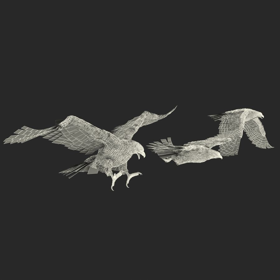 Rigged Eagles 3D Models Collection royalty-free 3d model - Preview no. 87
