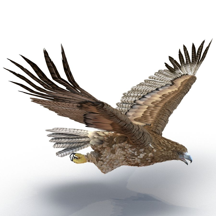 Rigged Eagles 3D Models Collection royalty-free 3d model - Preview no. 70