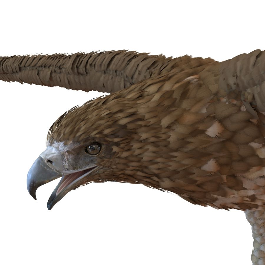 Rigged Eagles 3D Models Collection royalty-free 3d model - Preview no. 62