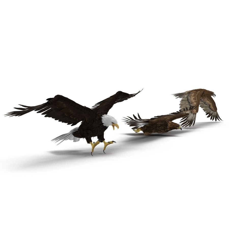 Rigged Eagles 3D Models Collection royalty-free 3d model - Preview no. 4