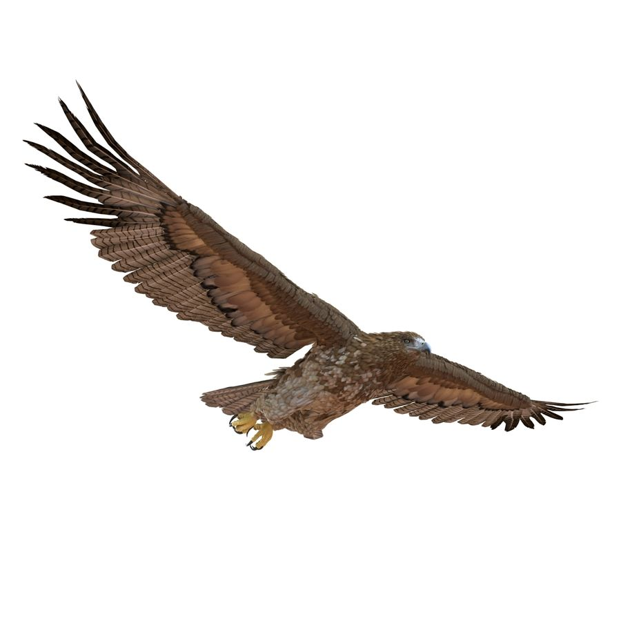 Rigged Eagles 3D Models Collection royalty-free 3d model - Preview no. 73