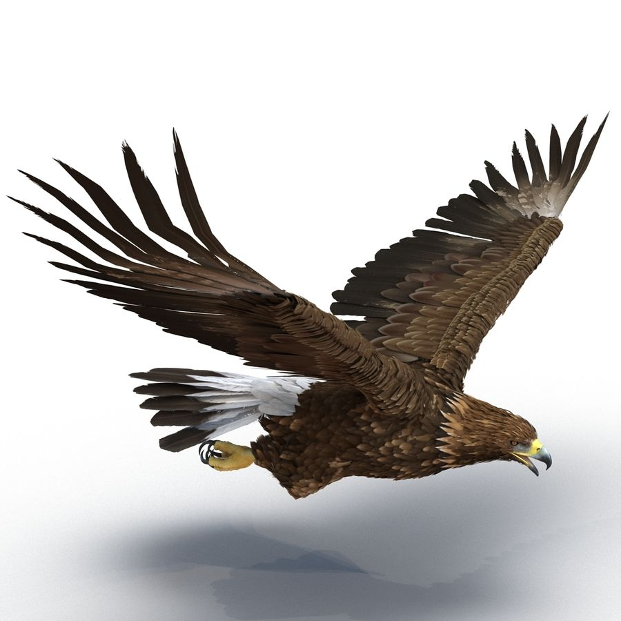 Rigged Eagles 3D Models Collection royalty-free 3d model - Preview no. 43
