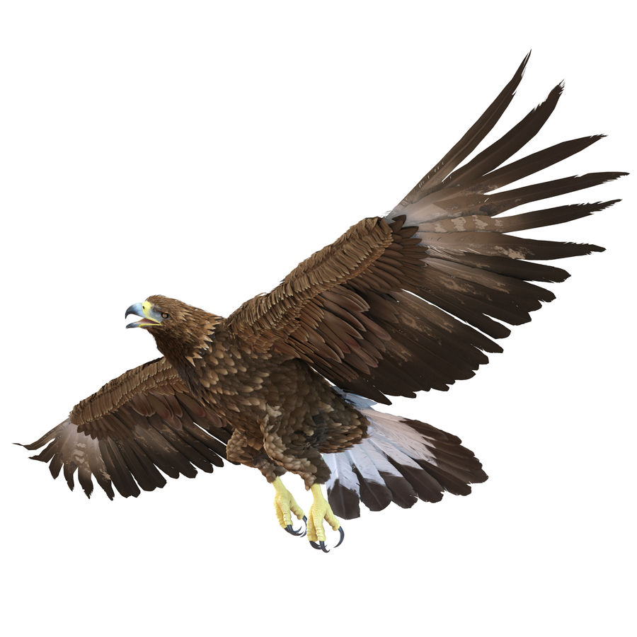 Rigged Eagles 3D Models Collection royalty-free 3d model - Preview no. 51