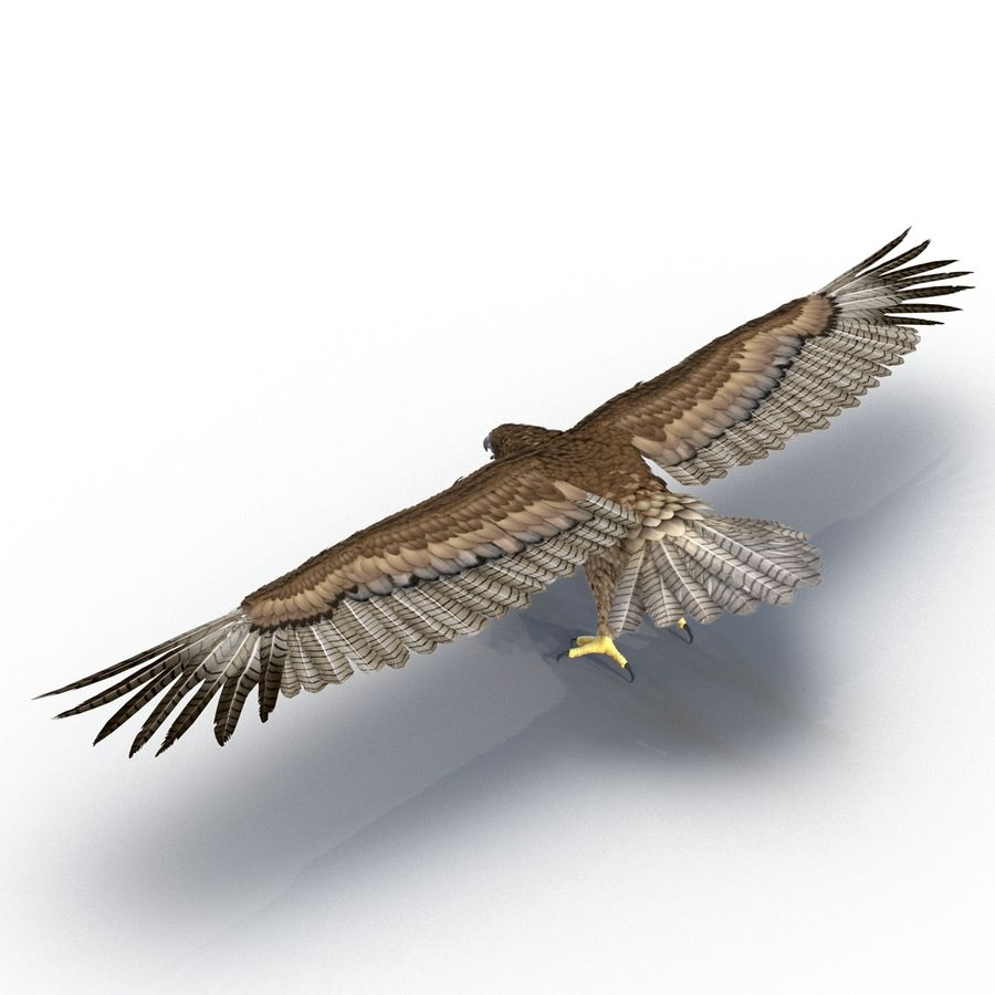 Rigged Eagles 3D Models Collection royalty-free 3d model - Preview no. 54