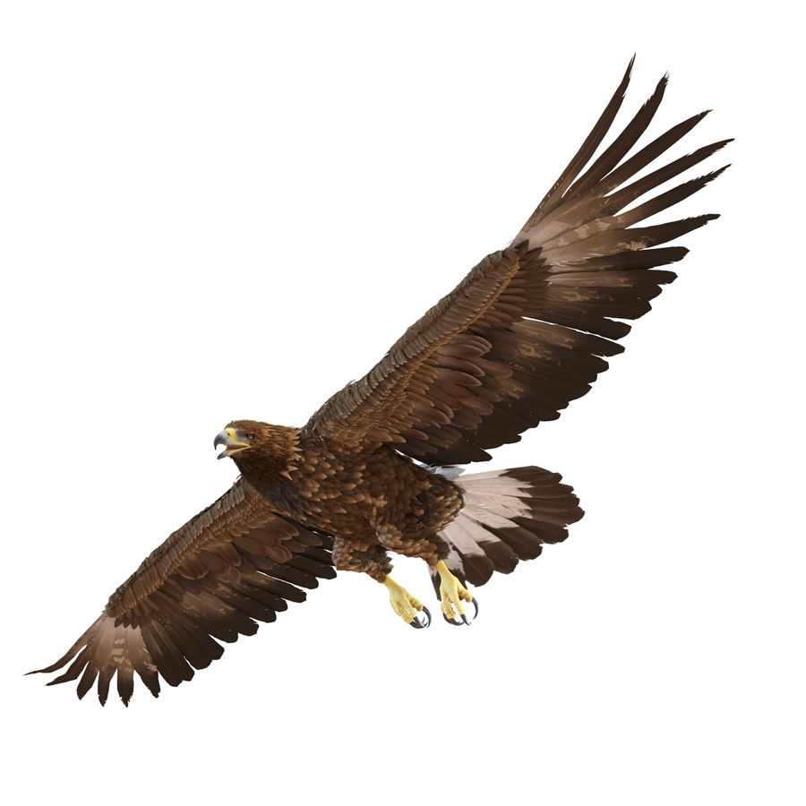 Rigged Eagles 3D Models Collection royalty-free 3d model - Preview no. 47
