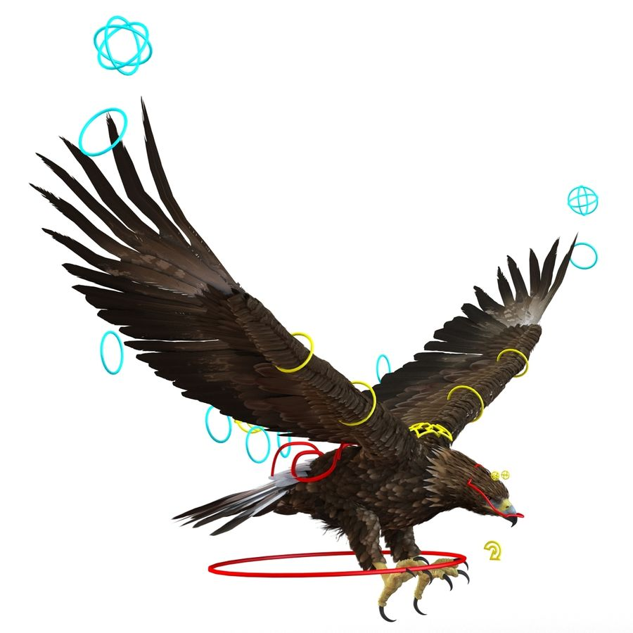 Rigged Eagles 3D Models Collection royalty-free 3d model - Preview no. 77