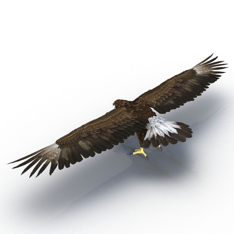 Rigged Eagles 3D Models Collection royalty-free 3d model - Preview no. 31