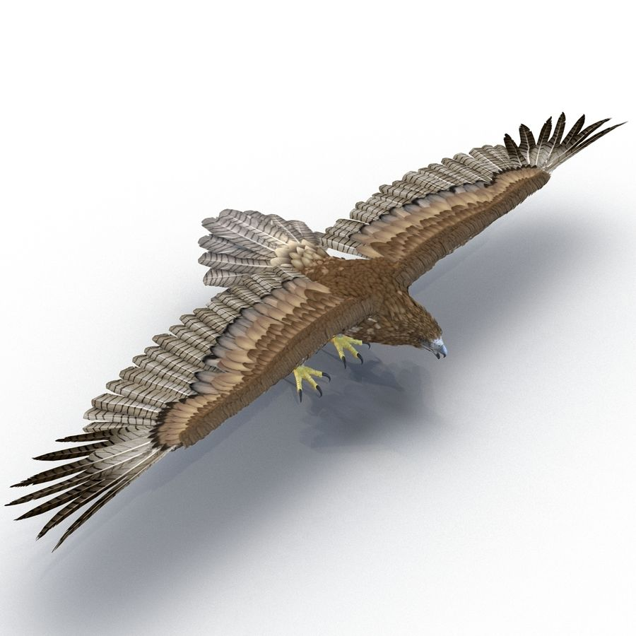 Rigged Eagles 3D Models Collection royalty-free 3d model - Preview no. 52