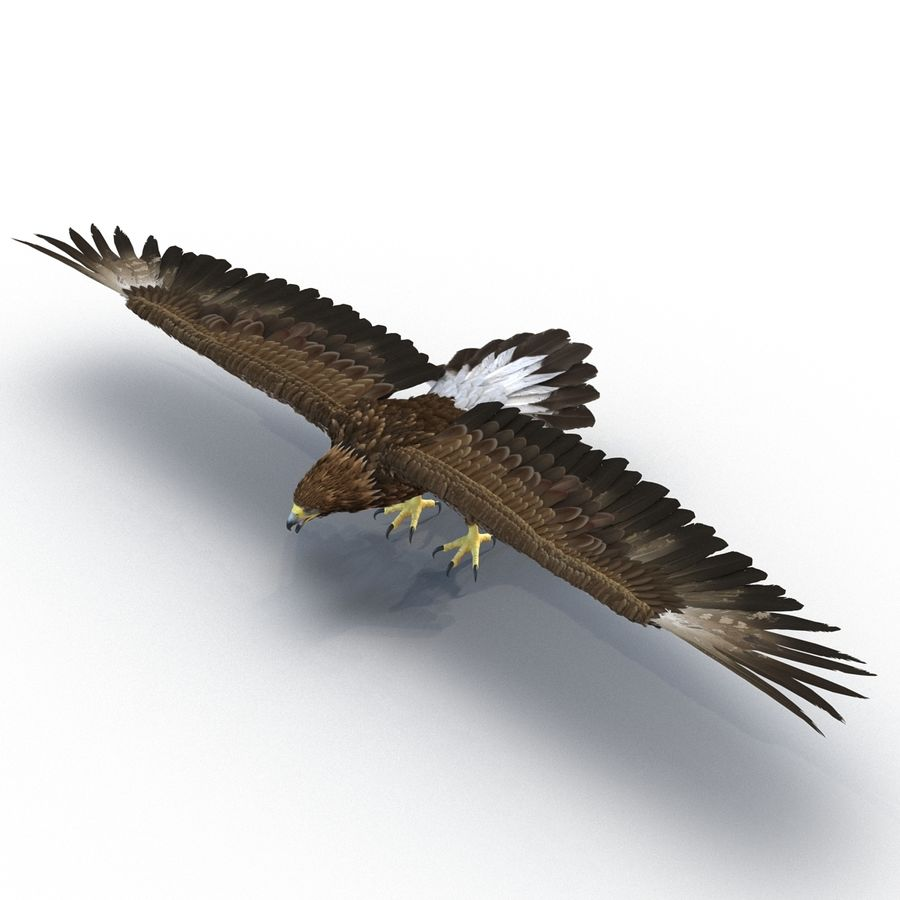 Rigged Eagles 3D Models Collection royalty-free 3d model - Preview no. 30