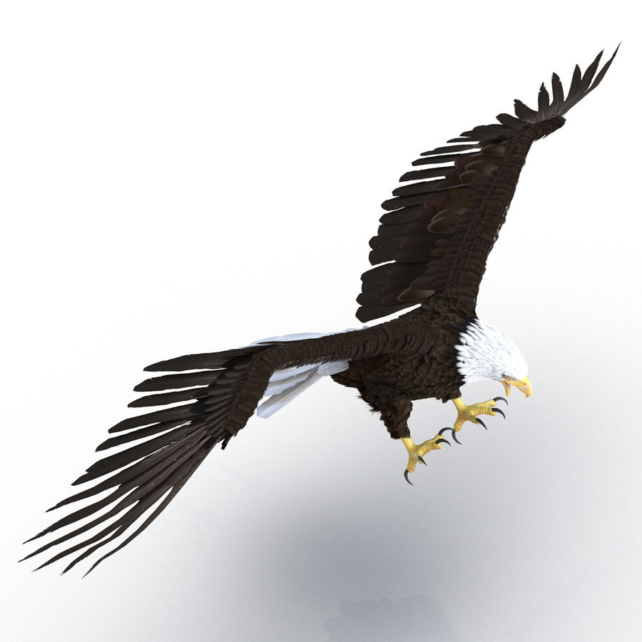 Rigged Eagles 3D Models Collection royalty-free 3d model - Preview no. 28