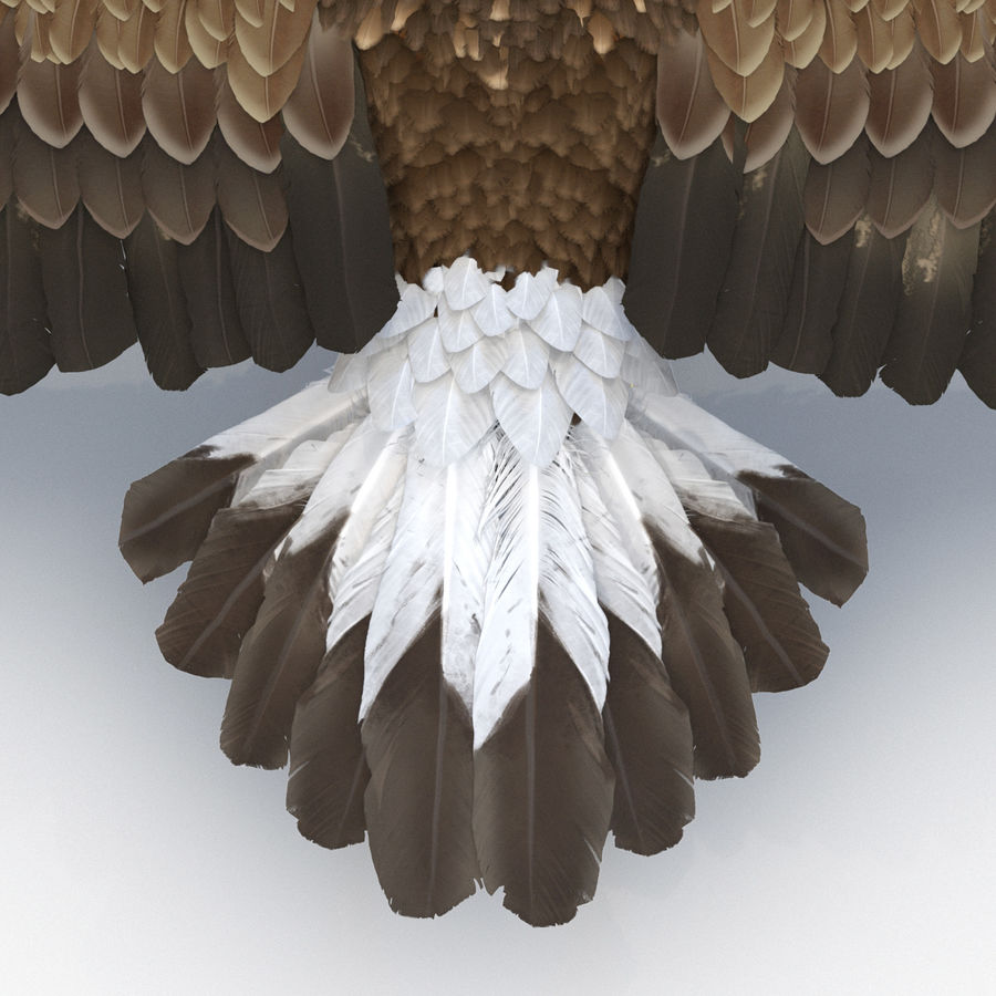 Rigged Eagles 3D Models Collection royalty-free 3d model - Preview no. 40