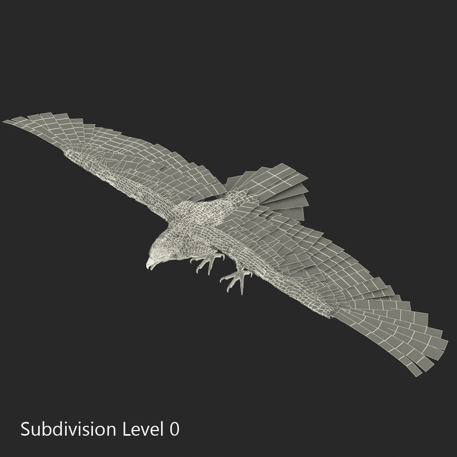 Rigged Eagles 3D Models Collection royalty-free 3d model - Preview no. 79
