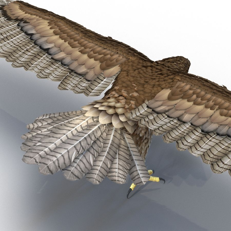 Rigged Eagles 3D Models Collection royalty-free 3d model - Preview no. 59