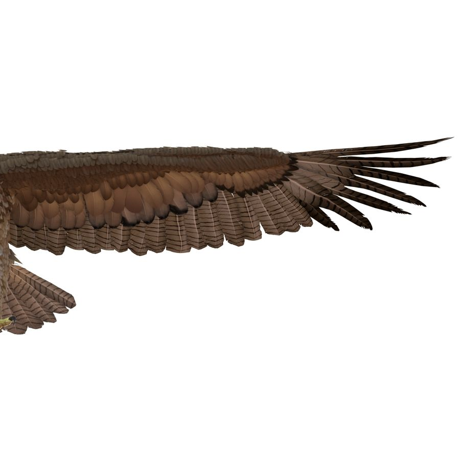 Rigged Eagles 3D Models Collection royalty-free 3d model - Preview no. 63