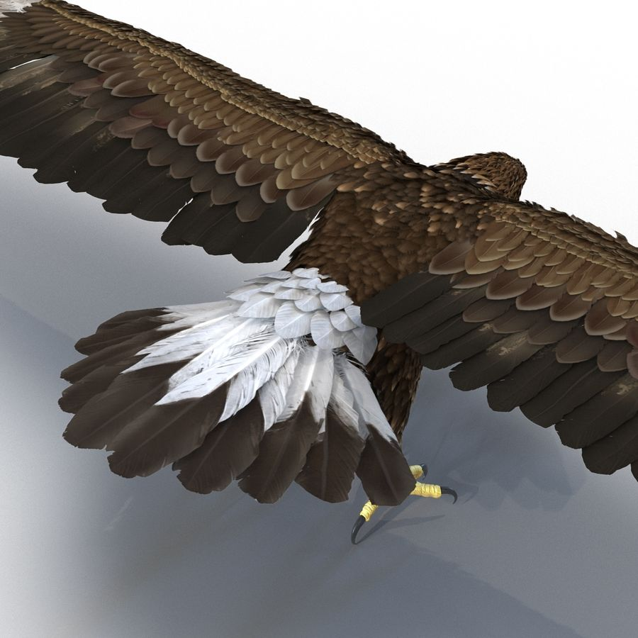 Rigged Eagles 3D Models Collection royalty-free 3d model - Preview no. 34
