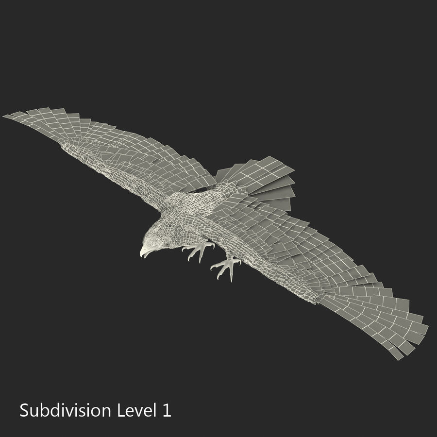 Rigged Eagles 3D Models Collection royalty-free 3d model - Preview no. 82