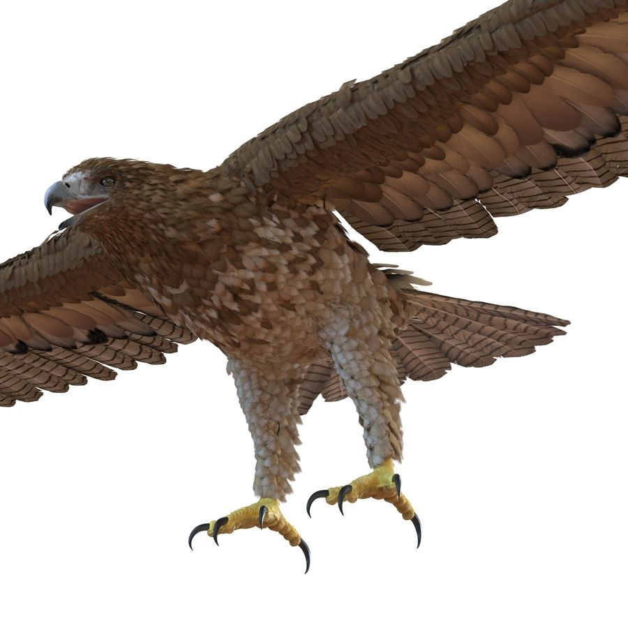 Rigged Eagles 3D Models Collection royalty-free 3d model - Preview no. 61