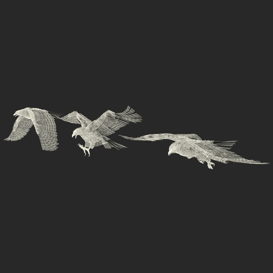 Rigged Eagles 3D Models Collection royalty-free 3d model - Preview no. 90