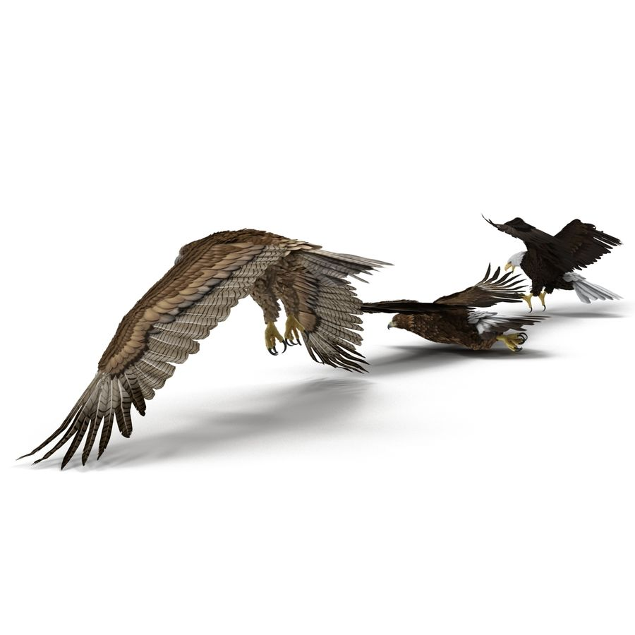 Rigged Eagles 3D Models Collection royalty-free 3d model - Preview no. 8