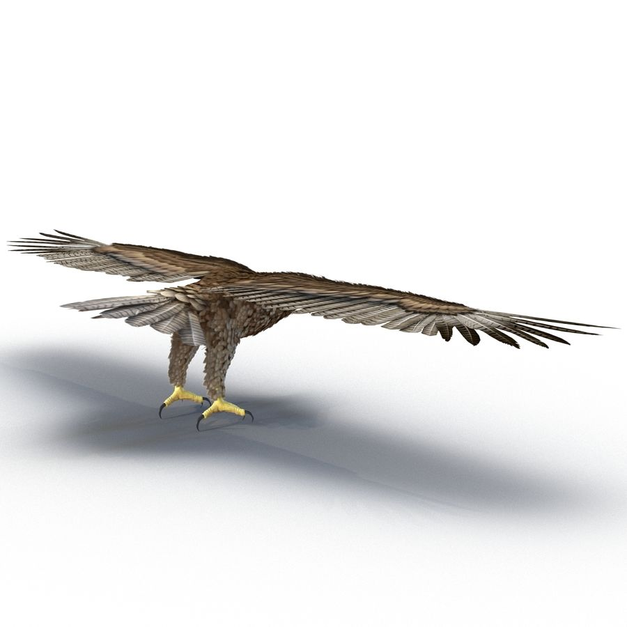 Rigged Eagles 3D Models Collection royalty-free 3d model - Preview no. 55