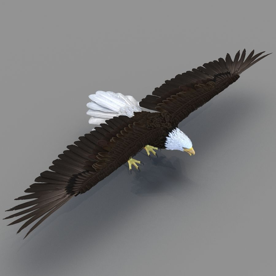Rigged Eagles 3D Models Collection royalty-free 3d model - Preview no. 10