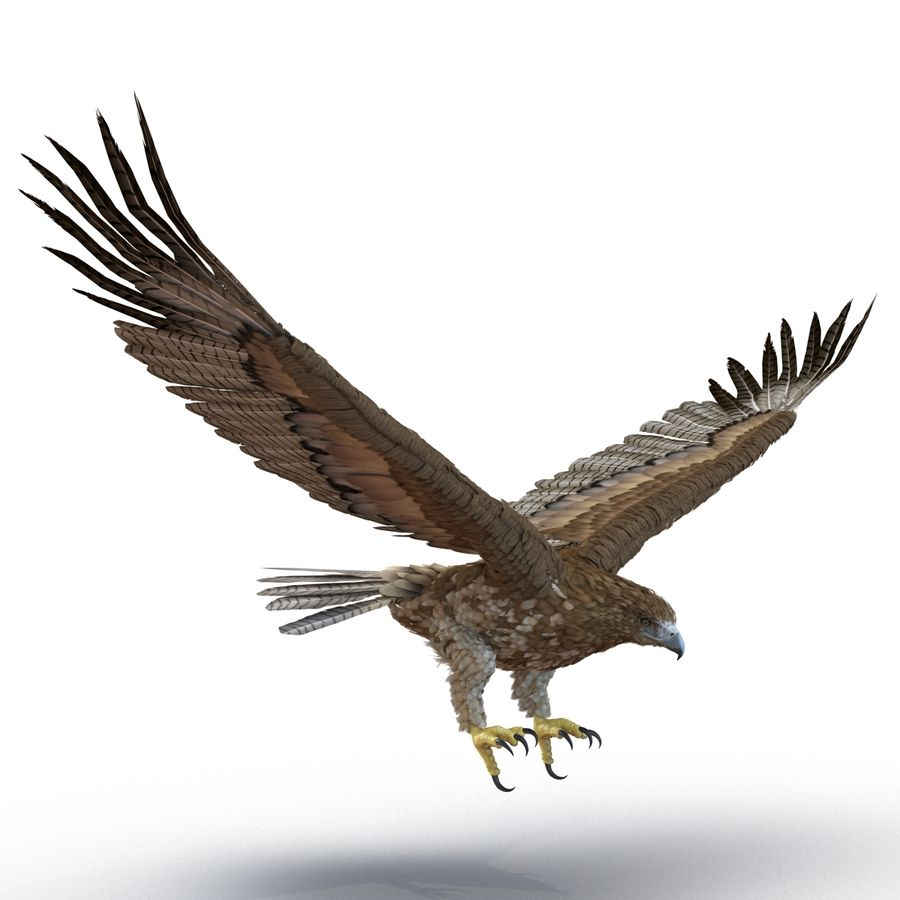 Rigged Eagles 3D Models Collection royalty-free 3d model - Preview no. 68