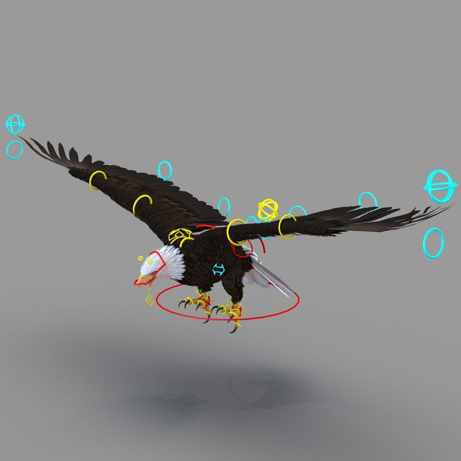 Rigged Eagles 3D Models Collection royalty-free 3d model - Preview no. 76