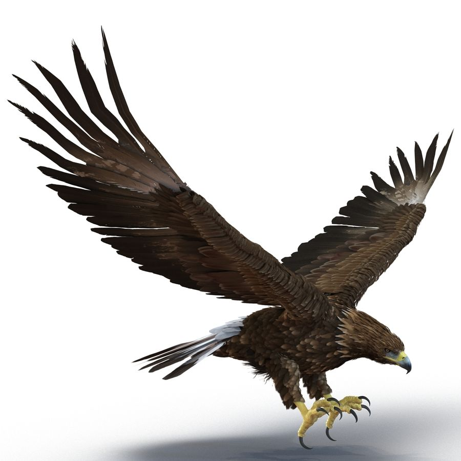 Rigged Eagles 3D Models Collection royalty-free 3d model - Preview no. 42