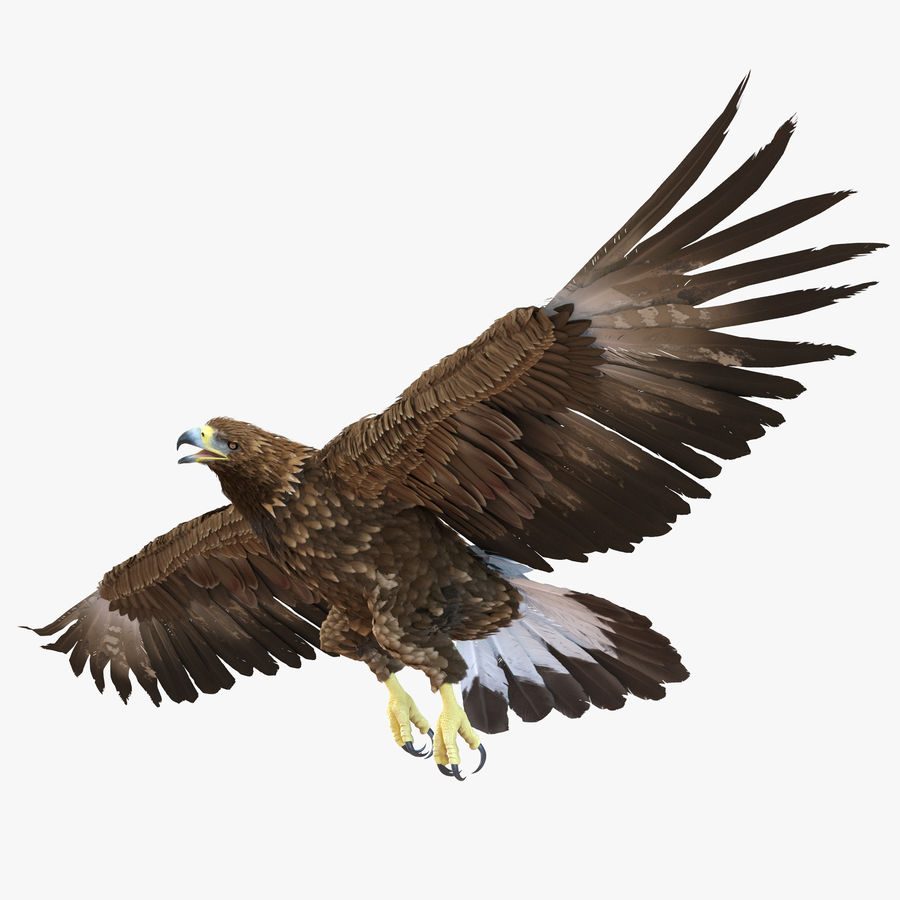 Rigged Eagles 3D Models Collection royalty-free 3d model - Preview no. 50