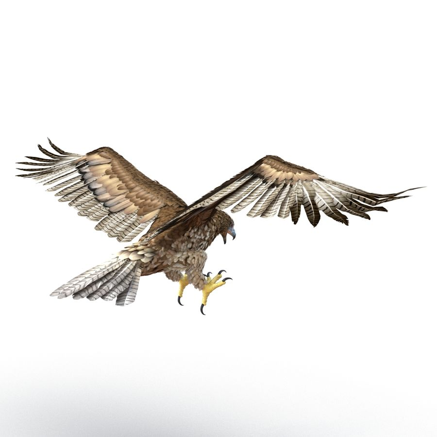 Rigged Eagles 3D Models Collection royalty-free 3d model - Preview no. 72