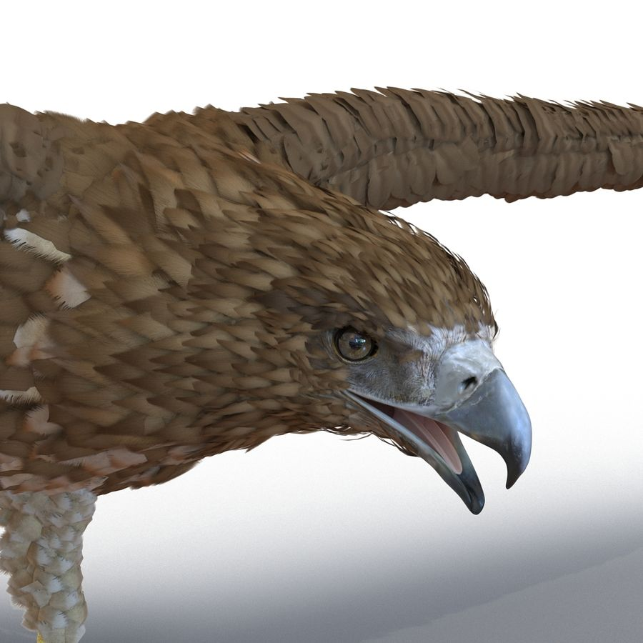 Rigged Eagles 3D Models Collection royalty-free 3d model - Preview no. 64