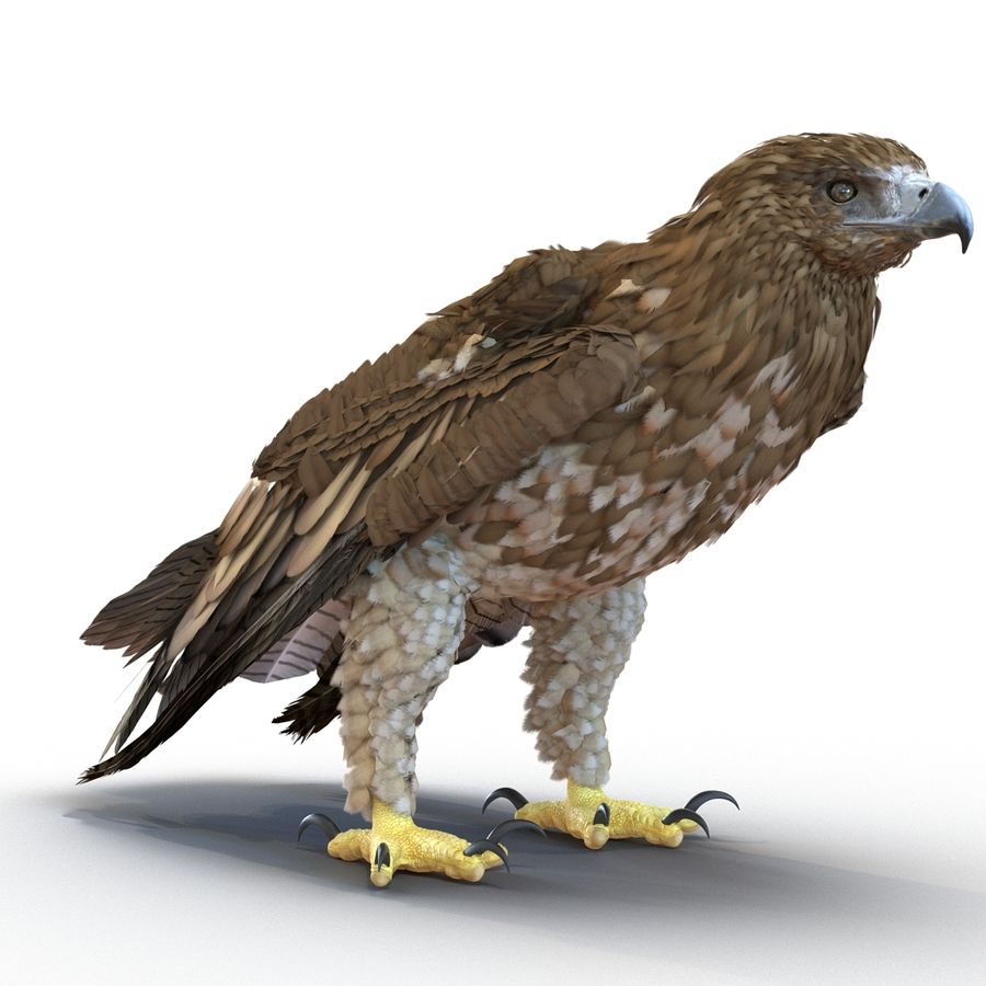 Rigged Eagles 3D Models Collection royalty-free 3d model - Preview no. 69